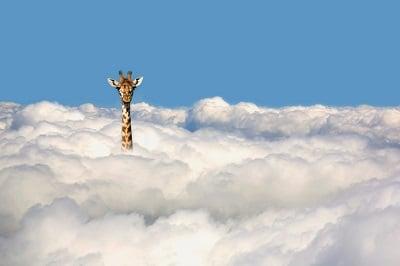 Beitragsbild/Teaser. Giraffe steckt den Kopf aus den Wolken